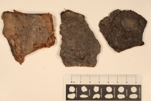 Paper coal. Age: Pennsylvanian from Indiana.