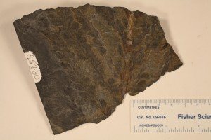 Archaeopteris foliage from N.Y. from the Devonian.
